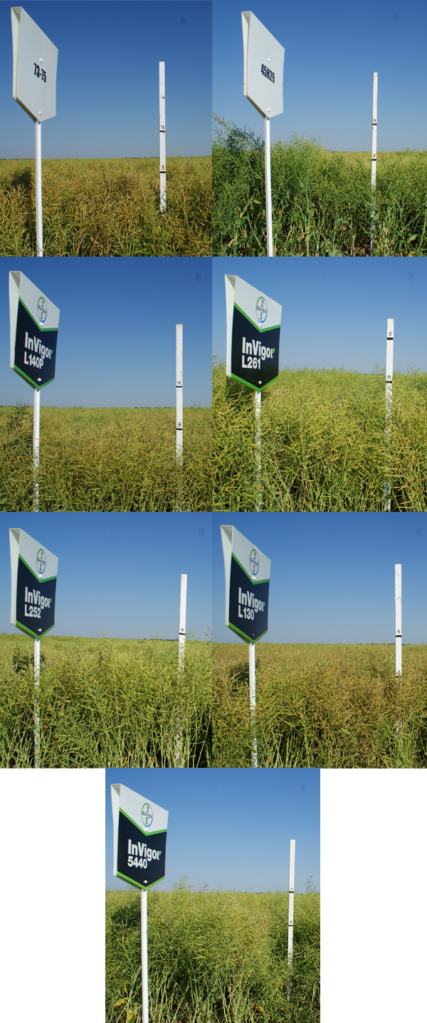 Bayer-Hybrids-Height-photo-2013